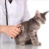 Ветеринарные клиники в Арзгире
